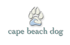 cape beach dog - travel website